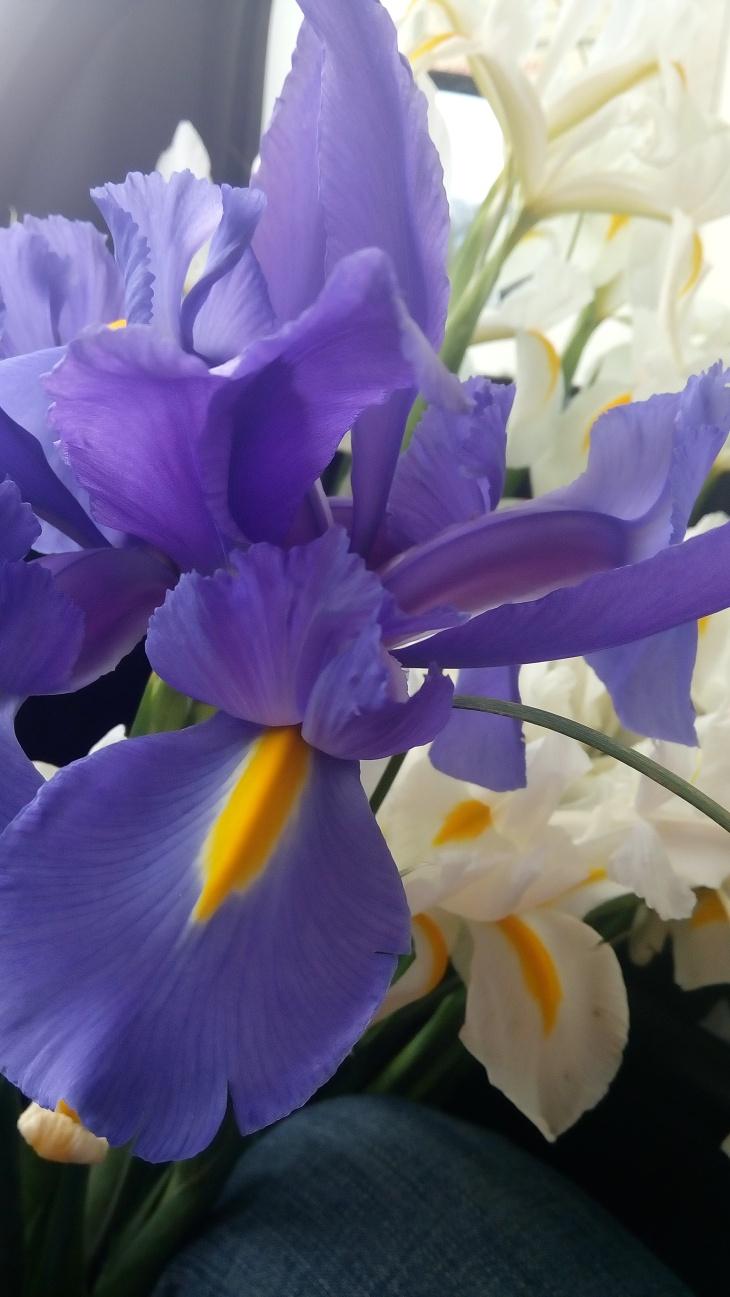 Iris Blue Flag
