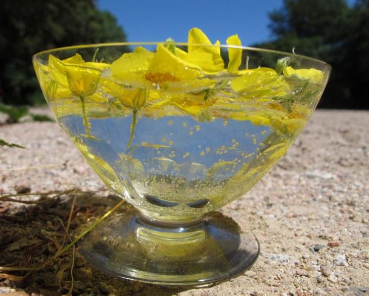 solarizando flores amarillas