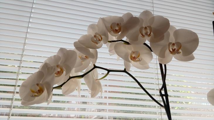 Orquídeas_20160714_200922