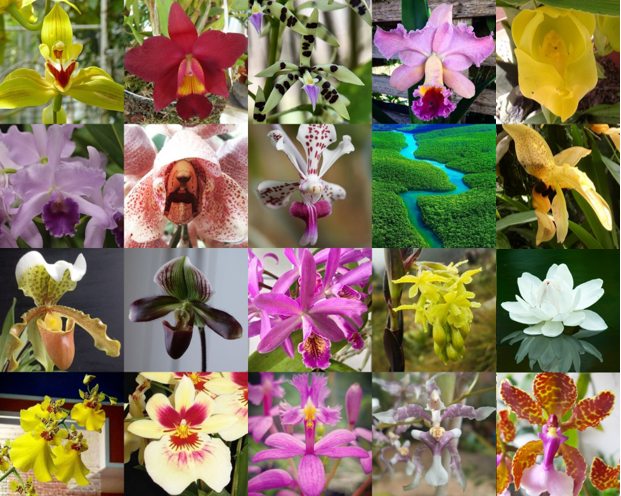 Orquídeas del Amazonas                             (20 esenciasflorales)