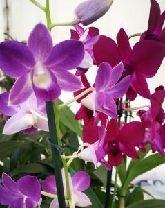Orquídeas_20171003_225156_266