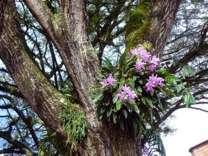 orquideas en arbol