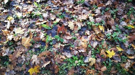 autumn leaves_20171126_152842
