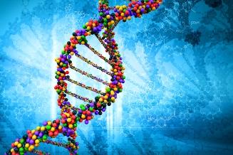 ADN - Hebra visible