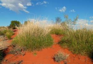 SPINIFEX I