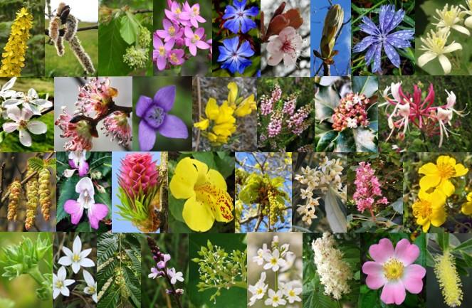 Las Flores deBach